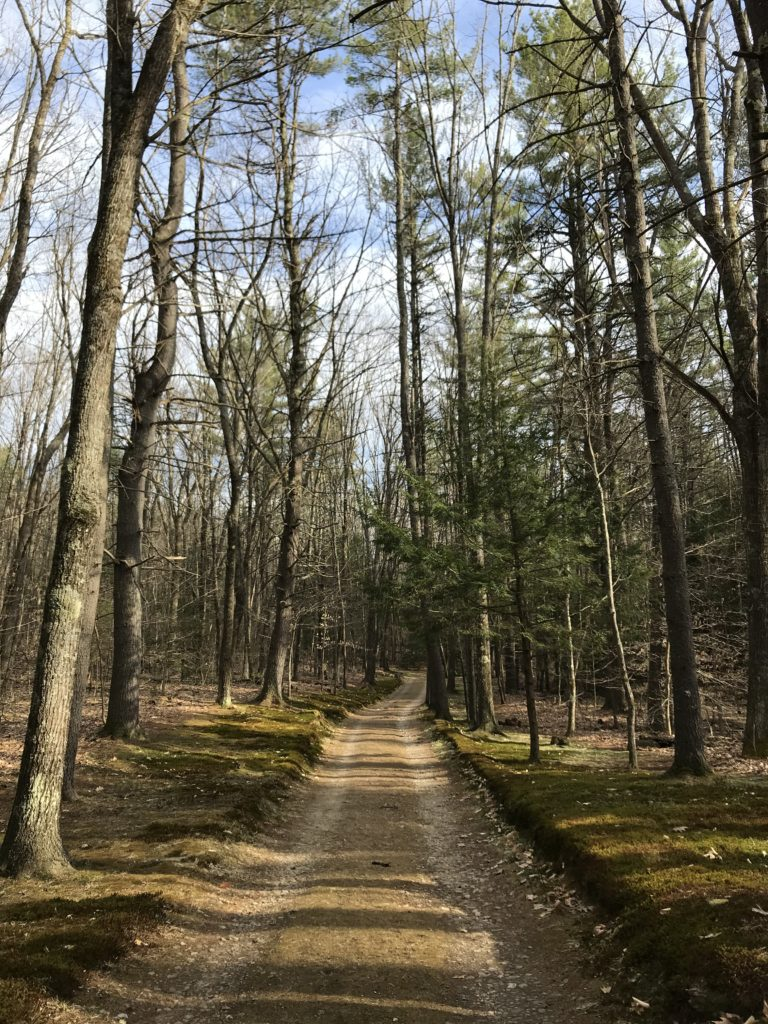 Looking for trails in New England? Tully Lake Trail in Royalston Massachusetts is a great spot for hiking, walking and kayaking. Find great nature areas and city escapes at awheelinthesky.com