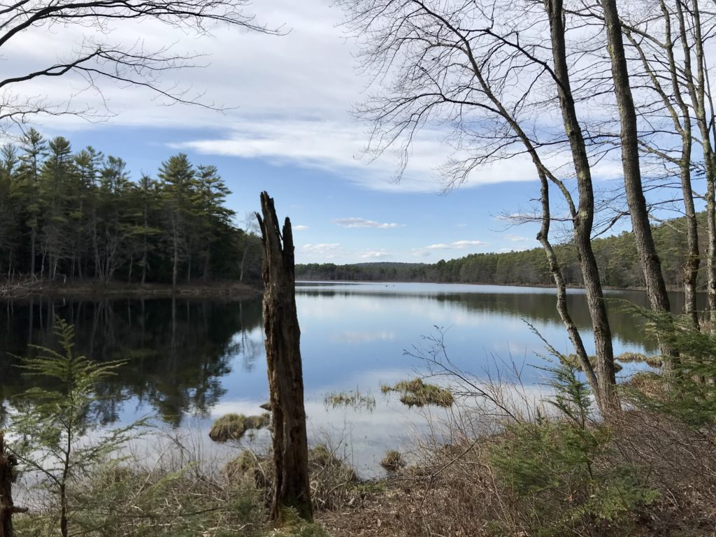 Looking for Massachusetts hiking trails? Tully Lake trail is a winding trail for hiking, walking and biking. Lake Tully is in Royalston, MA and is a great local travel spot.