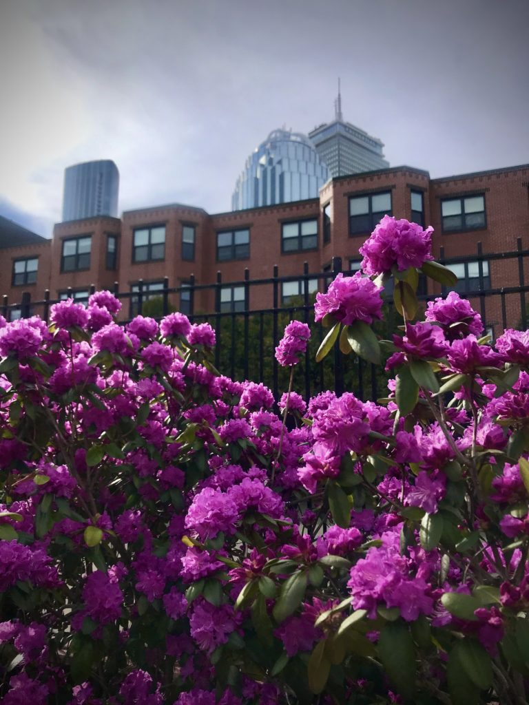 Explore Boston, MA and find hidden gems and the best views. Spring is the perfect time to explore Boston, or your own hometown. Find things to do outside- in nature and in the city. Great view of the Prudential Center in Boston, MA
