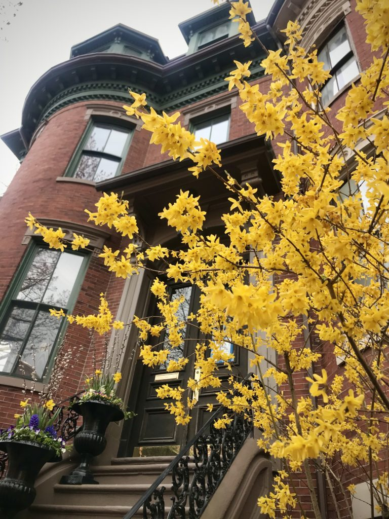 Find the best local travel ideas for nature trails or city escapes at awheelinthesky.com. Springtime in Boston is beautiful. The South End neighborhood in Boston, MA is a diverse neighborhood and great for exploring.
