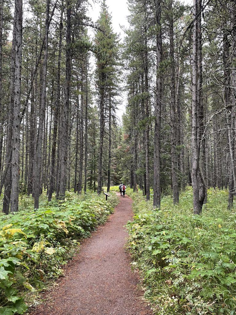 trail of cedars, avalanche lake, montana, glacier national park, solo trip to glacier national park, solo trip to glacier park, solo female hiker in Glacier National PArk