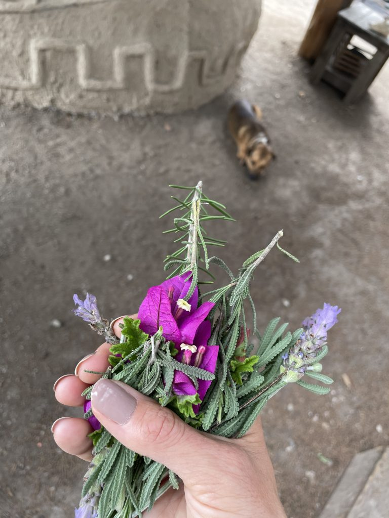Herbs, flowers, temazcal, prehispanic ritual, ceremony, temazcal ceremony, cleansing, meditation, spiritual experiences mexico