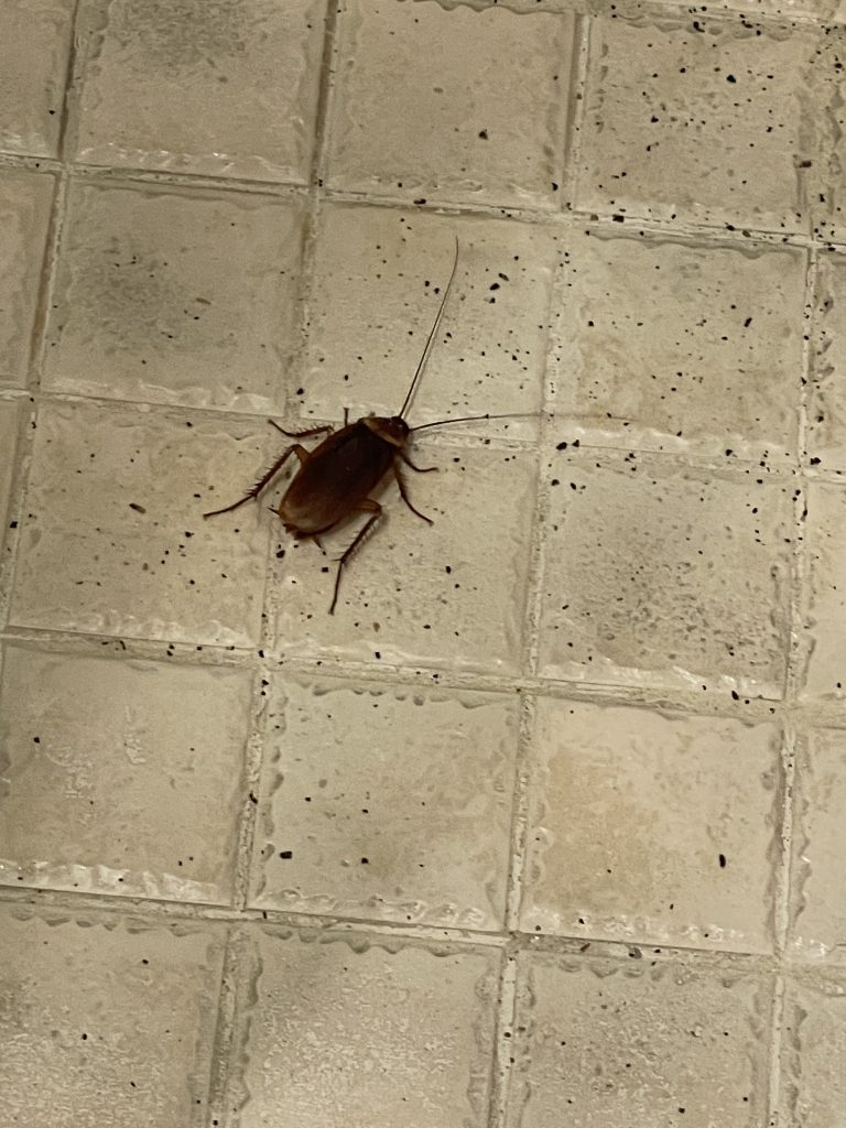 cockroach, gross things about hotels, creepy things about hotels, roaches in hotel, bugs in hotel room, scary things about hotels, why hotels are gross, are hotels clean